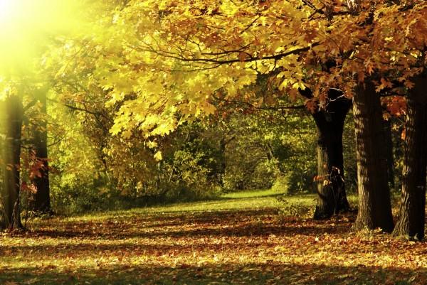 Magnettafel Pinnwand XXL Bild Natur Herbst Laub Baum