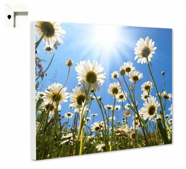 Magnettafel Pinnwand Sommerblumenwiese