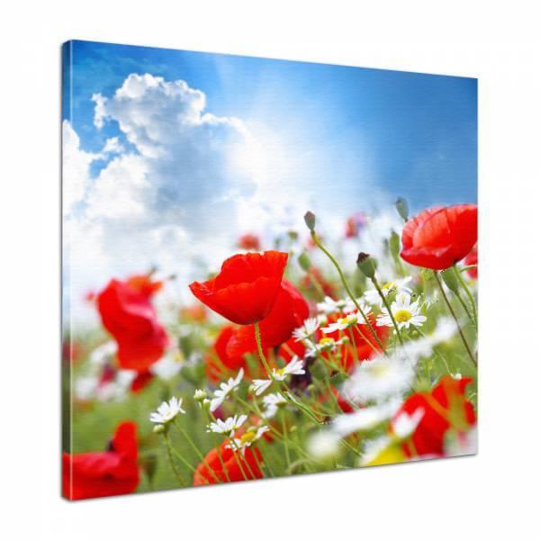 Leinwand Bild edel Blumen Mohn Wiese