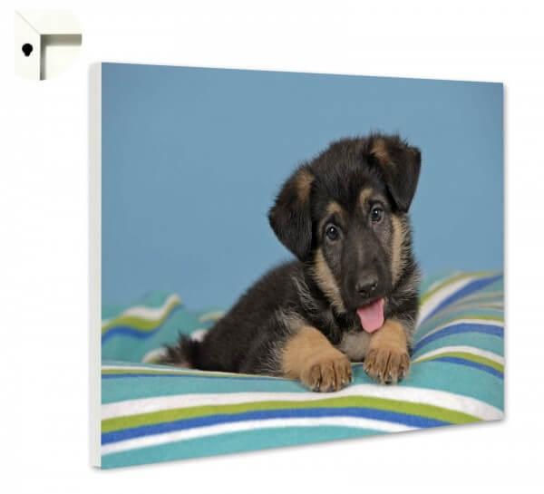 Magnettafel Pinnwand Tiere Hund Welpe