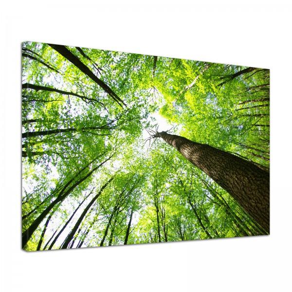 Leinwand Bild edel Natur Wald Blick in die Baumkronen