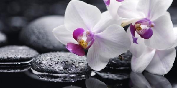 Magnettafel Pinnwand Bild XXL Panorama Orchideen weiß Zen Steine