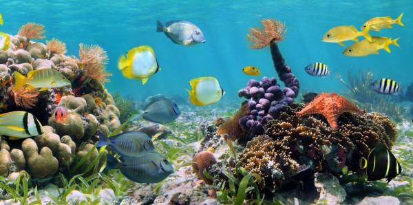 Magnettafel Pinnwand Bild XXL Tropen Fische Korallen Riff