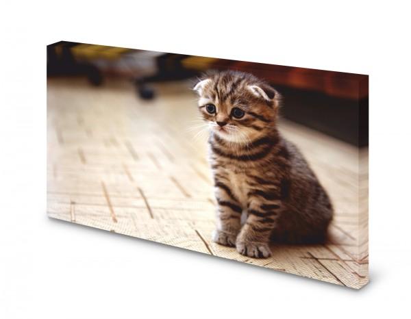 Magnettafel Pinnwand Bild Katze Faltohrkatze Babykatze gekantet