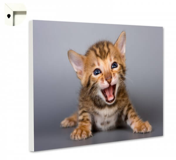 Magnettafel Pinnwand Memoboard Motiv Tiere Niedliche Katze