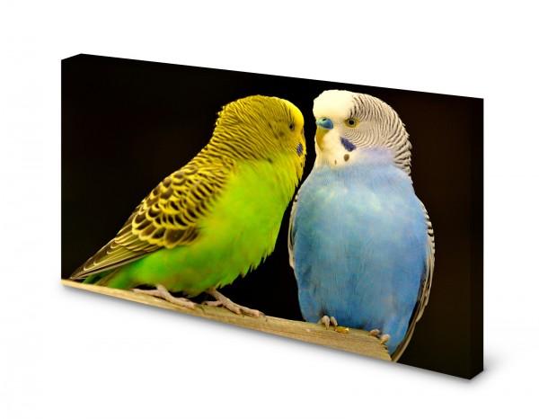Magnettafel Pinnwand Bild Wellensittich Vogel XXL gekantet