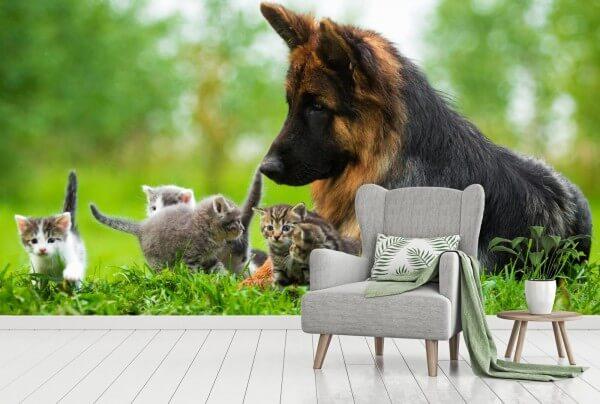 Vlies Tapete XXL Poster Fototapete Schäferhund Katzen Freunde