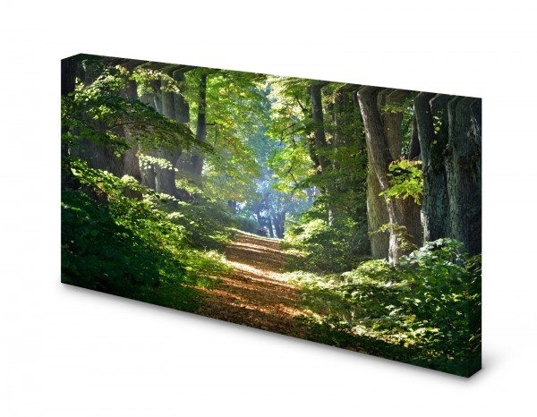 Magnettafel Pinnwand Bild Natur Wald Waldweg Weg Lichtung gekantet