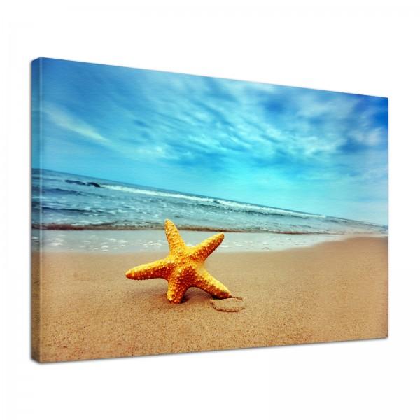 Leinwand Bild edel Natur Seestern am Strand