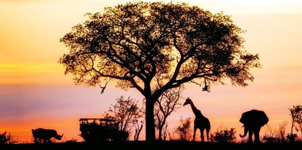 Magnettafel Pinnwand Bild XXL Panorama Afrika Tiere Wildnis