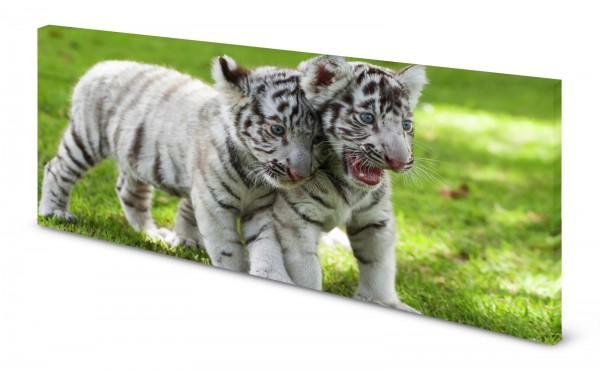 Magnettafel Pinnwand Bild Tiger Tigerbaby weiß gekantet