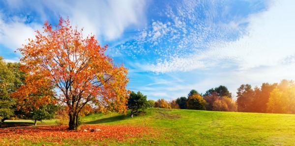Magnettafel Pinnwand Bild XXL Panorama Landschaft Baum Herbst