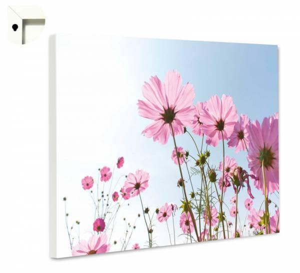 Magnettafel Pinnwand Natur lila Blumen im Sommerhimmel