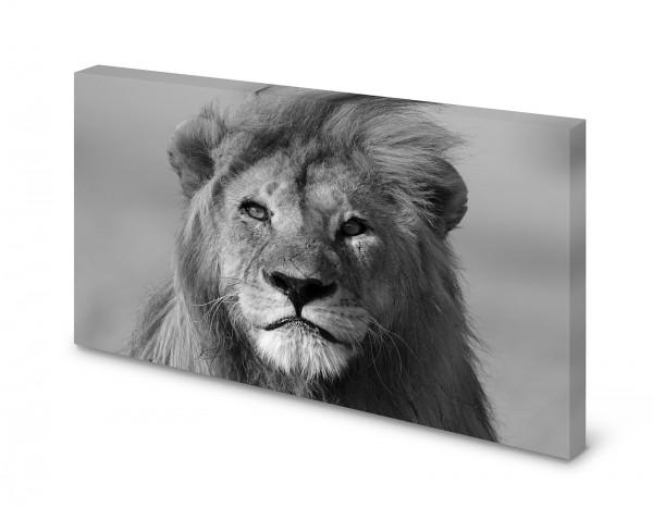 Magnettafel Pinnwand Bild Löwe schwarz weiß XXL gekantet
