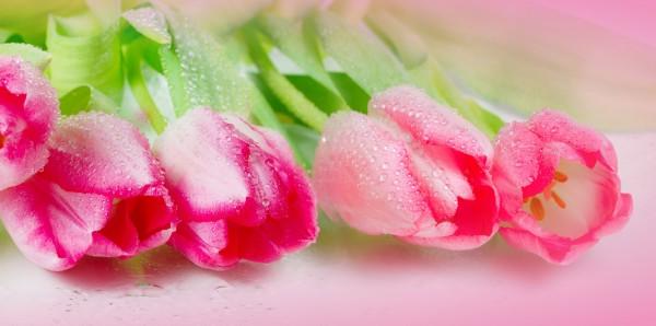 Magnettafel Pinnwand Bild XXL Panorama Tulpen Blüten rosa