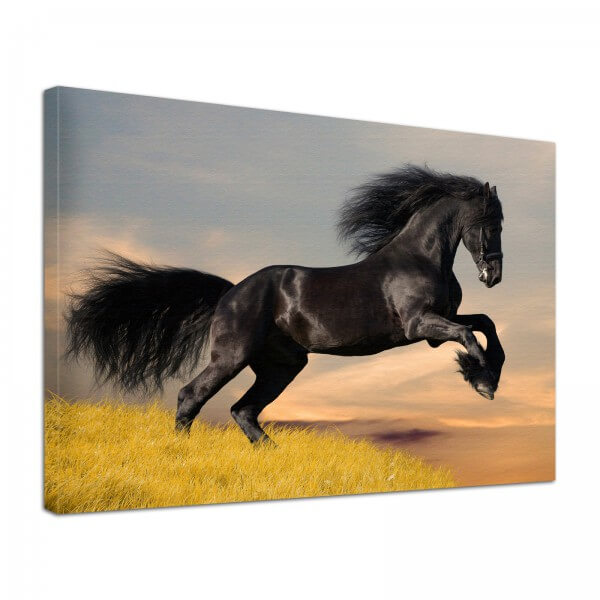 Leinwand Bild edel Tiere Pferd wild