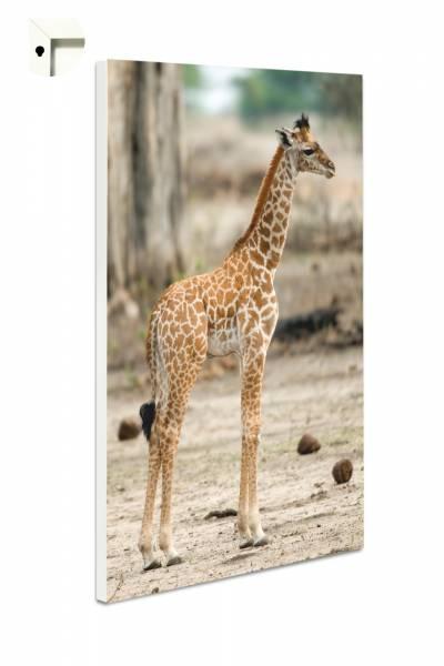 Magnettafel Pinnwand Tiere Giraffenbaby