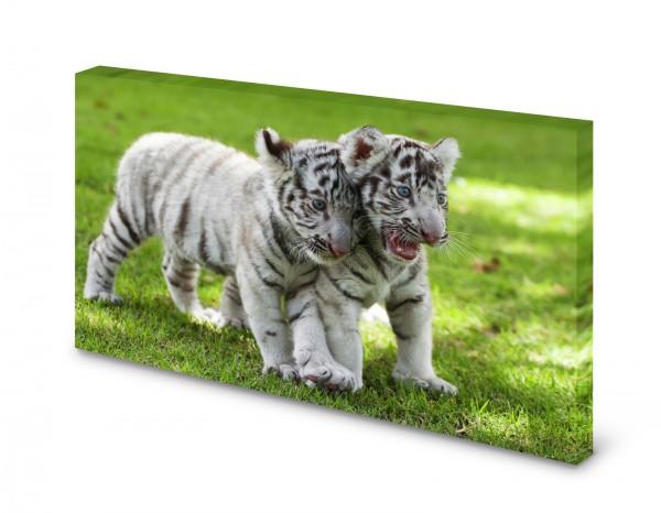 Magnettafel Pinnwand Bild Tigerbabys Tiger Katzen weiß gekantet