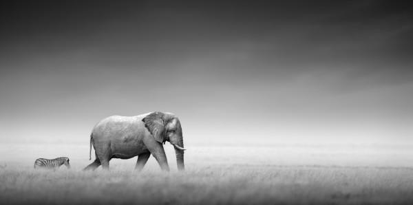 Magnettafel Pinnwand Bild XXL Panorama Elefant Zebra