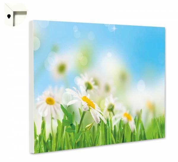 Magnettafel Pinnwand Blumen Gänseblümchen auf der Wiese