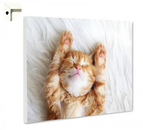 Magnettafel Pinnwand Memoboard Tiere Katze Katzenbaby auf Flokati