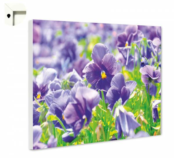 Magnettafel Pinnwand Blumen Lila Stiefmütterchen im Fühling