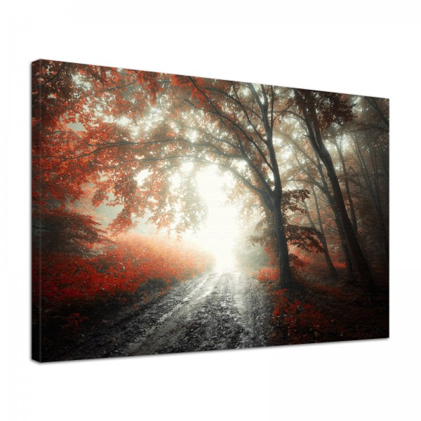 Leinwand Bild edel Natur Wald Weg im Nebel