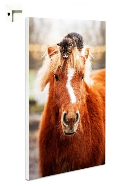 Magnettafel Pinnwand Tiere Pony und kleine Katze