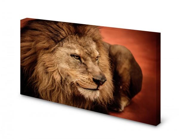 Magnettafel Pinnwand Bild Löwe Raubkatze XXL gekantet
