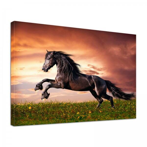 Leinwand Bild edel Tiere Pferd im Abendrot