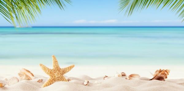 Magnettafel Pinnwand Bild XXL Panorama Strand Seestern Palmen