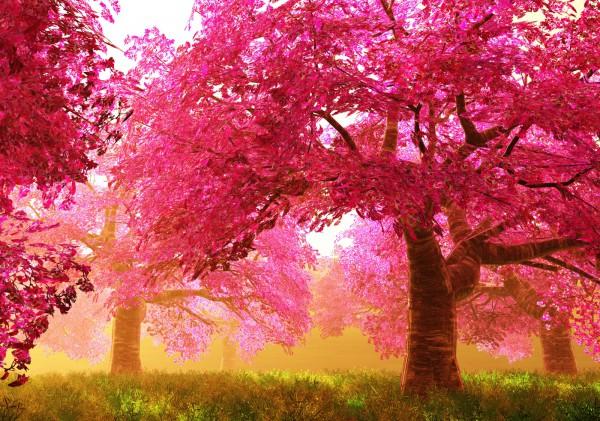 Vlies XXL-Poster Fototapete Natur & Blumen Wald pink rosa surreal