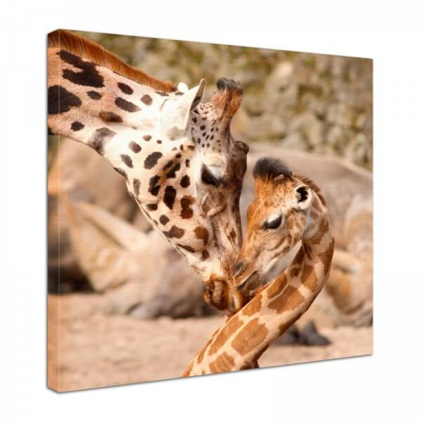 Leinwand Bild edel Tiere Giraffen Mutter & Kind