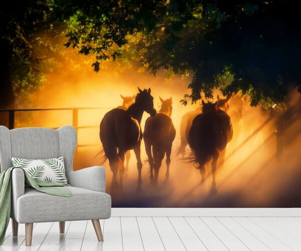 Vlies Tapete XXL Poster Fototapete Pferde Sonnenuntergang