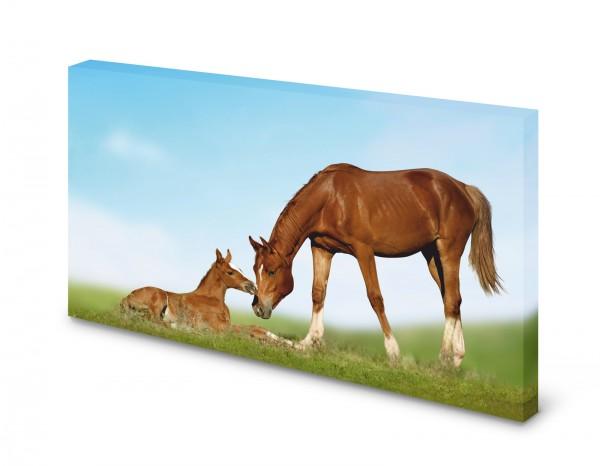 Magnettafel Pinnwand Bild Fohlen Pferd Stute gekantet