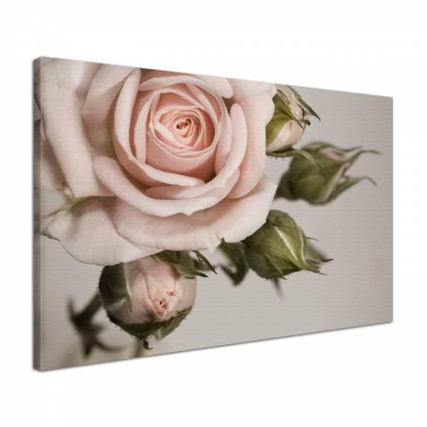 Leinwandbild Bild Wandbild Blumen Rosen Knospen