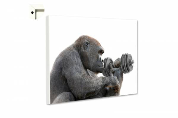 Magnettafel Pinnwand Fitness Gorilla Silberrücken
