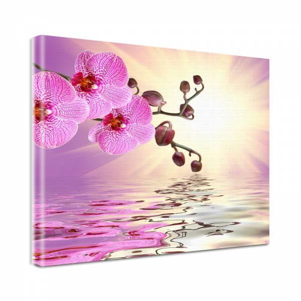 Leinwand Bild Natur & Blumen Orchidee in rosa und weiß