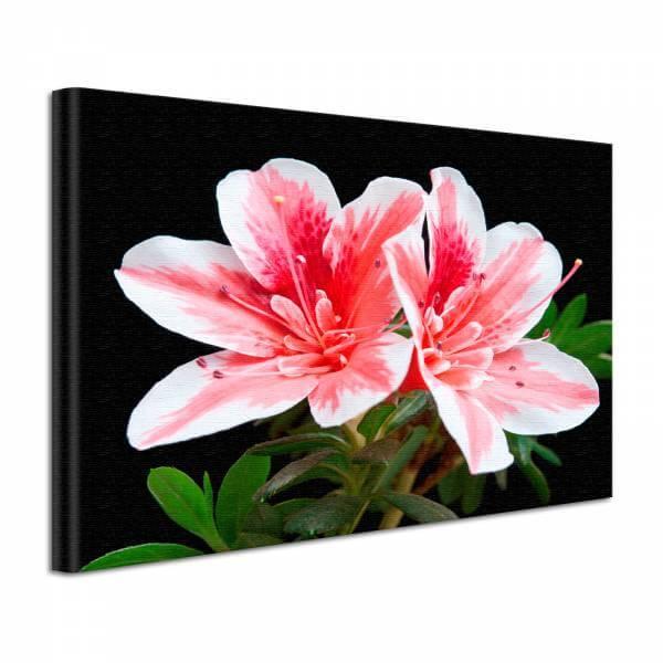 Leinwand Bild edel Blumen Lilie in rosa und schwarz
