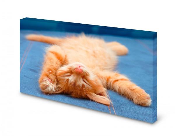 Magnettafel Pinnwand Bild Katze Babykatze Kitten XXL gekantet