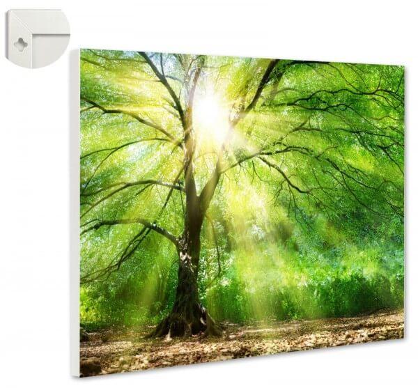 Magnettafel Pinnwand Natur Wald Lichtung
