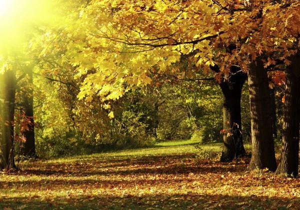XXL Poster Fototapete Tapete Vlies Natur Wald im Herbst selbstklebend oder normal