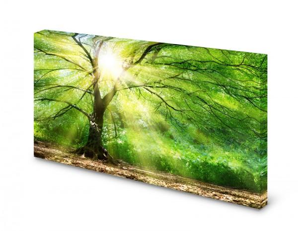 Magnettafel Pinnwand Bild Wald Baum Lichtung XXL gekantet