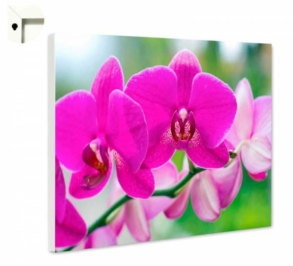 Magnettafel Pinnwand Natur Blumen Orchidee