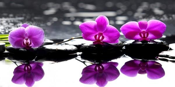 Magnettafel Pinnwand XXL Magnetbild Orchidee Steine Zen