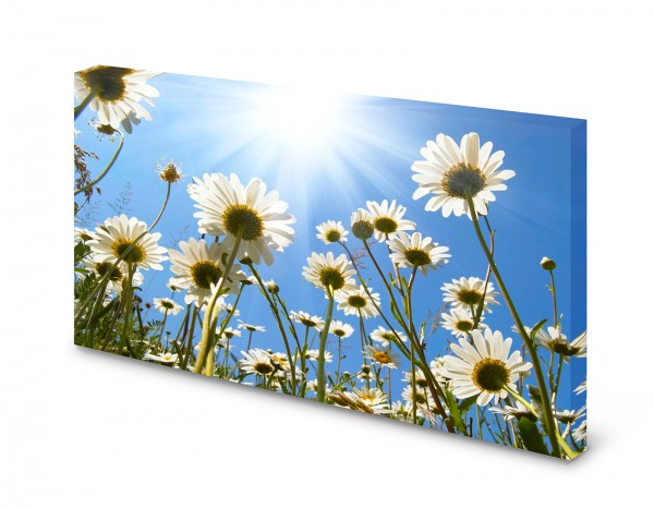 Magnettafel Pinnwand Bild Blumen Margeriten Himmel Sonne Natur