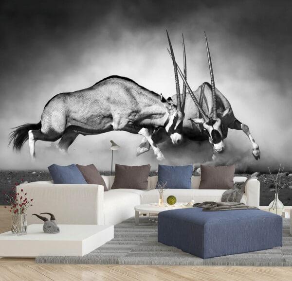 Vlies Tapete Poster Fototapete Antilopen Afrika Kampf Wildnis