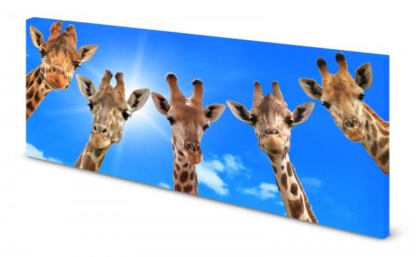 Magnettafel Pinnwand Bild Giraffe Giraffen Moin gekantet