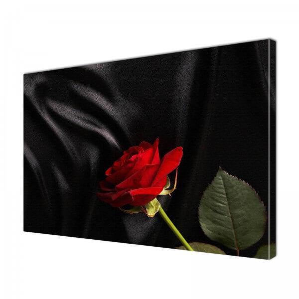 Leinwandbild Bild Wandbild Natur & Blumen rote Rose auf schwarzer Seide