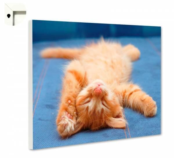 Magnettafel Pinnwand Tiere Katzen Baby